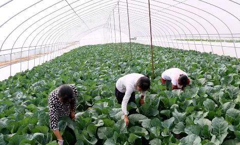赣州会昌现代农业提质增效助力乡村振兴
