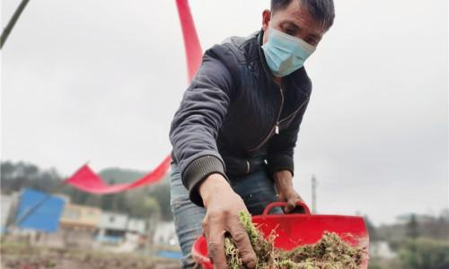 海南省年底前将完成农村裸露土地种草绿化专项整治