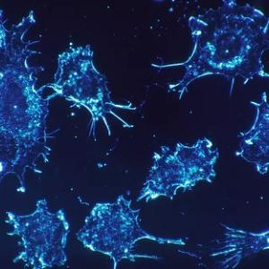 新发现的免疫细胞,可治疗现有多种癌症还不掉头发,最早11月进行人体试验