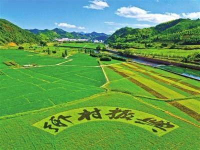 数字农业是中国乡村振兴战略的重要发力点