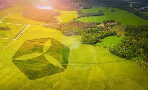 中国推出乡村振兴票据 引导鼓励社会资本投资农业农村