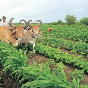 民以食为天,这里有4家农业与食品早期科技创业公司