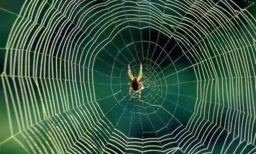 """""""纯素蜘蛛丝""""制品可家用 替代一次性塑料"""