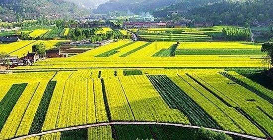乡村特色产业政策频出 金融支持力度加强