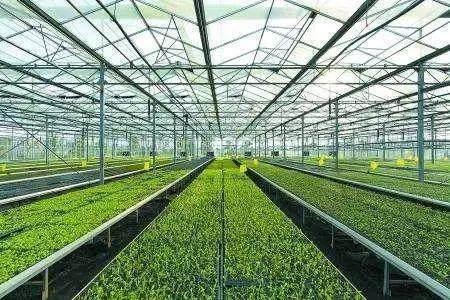 农业农村部:实施一批重大项目 引导金融和资本投入现代农业