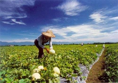 乡村振兴:从产业扶贫到产业振兴 升级版举措将集中落地