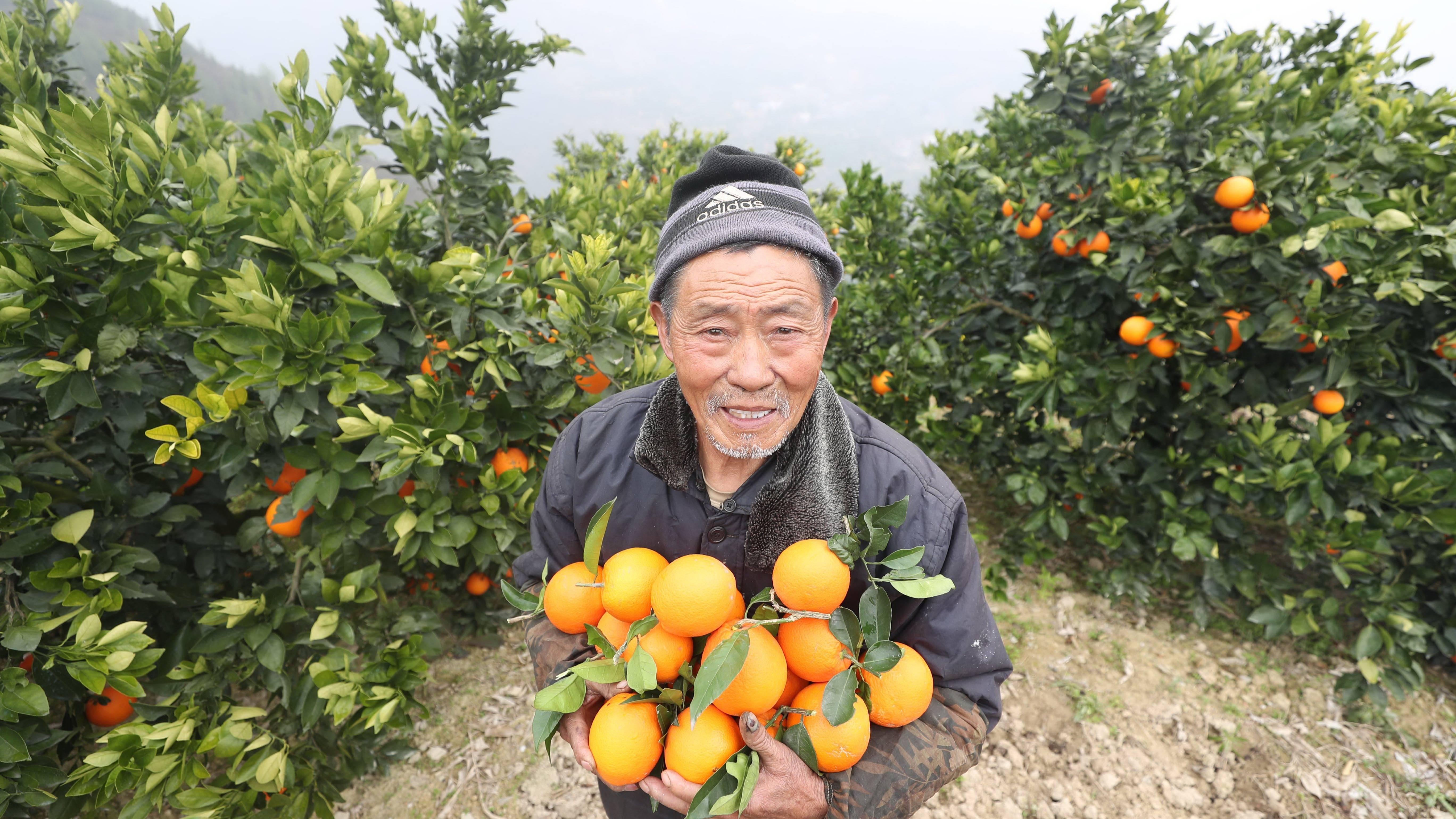 """被精准扶贫各方盯上的""""农产品电商""""到底该怎么做?"""