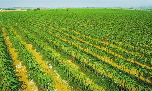 把海南打造成世界一流热带农业科学中心